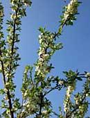 Blattlausbekämpfung im Garten