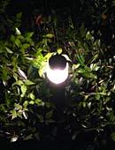 tierfreundliche Gartenbeleuchtung