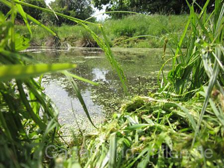 Foto: Teich im Garten mit Bepflanzung