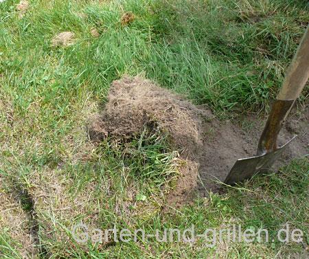 Foto: Vorbereitung des Bodens für den Bau eines Hochbeetes