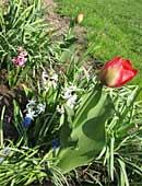Pflanzzeit – Welche Pflanzen dürfen jetzt in den Garten