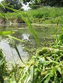 Ein eigener Teich im Garten