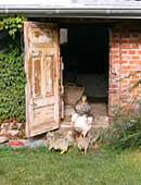 Aufräumcoach schafft Ordnung in Haus und Garten