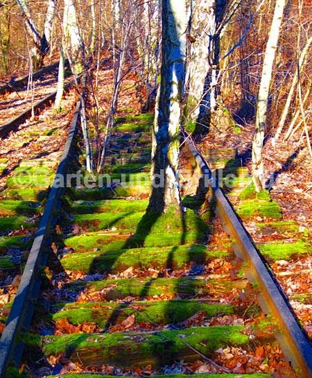 Bahnschienen-Birken-Natur-Park-Schoeneberger-Suedgelaende