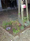 Guerilla Gardening in Berlin Prenzlauer Berg