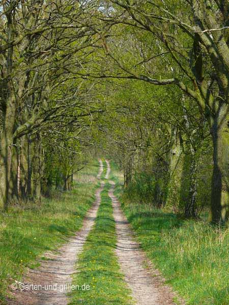 Der Weg in den Märchenwald